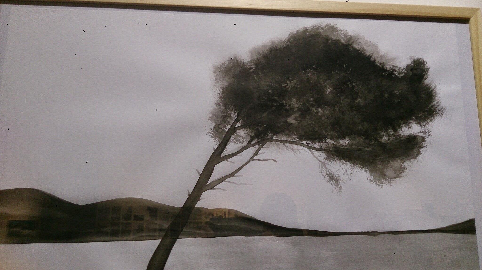 le Cers souffle sur les pins du Languedoc